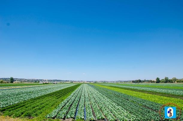 A view of the farm plains in Bathurst.