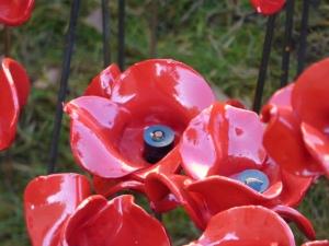 poppies 11
